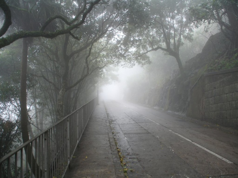 Misty Trail Through Victoria Peak